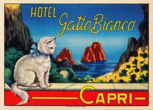 hotel-gatto-bianco-capri