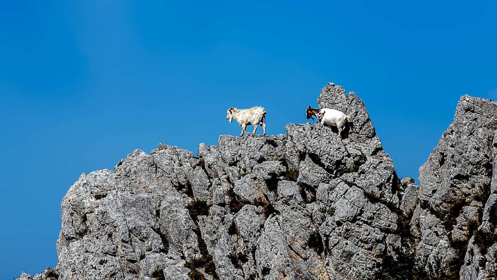 capre-a-capri